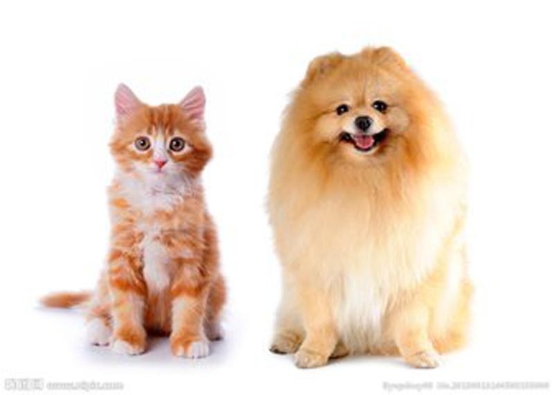 养宠物的家庭是装暖气片好还是地暖�