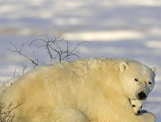 这个寒冬看看动物们是如何取暖的